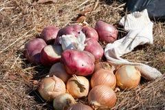 земные овощи Стоковая Фотография