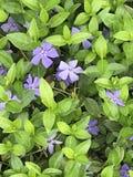 Земные цветки Стоковые Фото