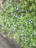 Земные цветки Стоковая Фотография