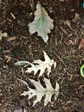 3 земных листь Стоковая Фотография
