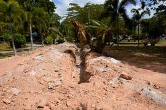 землерой стоковая фотография rf