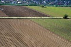 Земледелие - линейный полив предыдущего cr весны роста Стоковое фото RF