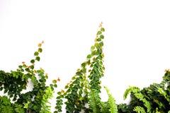 Земледелие и осеменять концепцию шага семени завода растущую Стоковые Фото