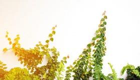 Земледелие и осеменять концепцию шага семени завода растущую Стоковая Фотография RF