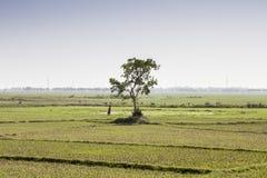 Земледелие около сына Nagar Бихар Индия Стоковые Изображения