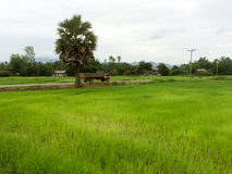 Земледелие фермера Стоковая Фотография RF