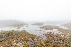 Земли болота стоковые фотографии rf