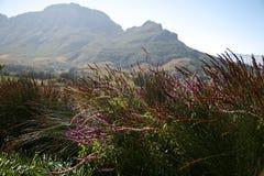 Земли вина накидки, Stellenbosch, s A Стоковые Фотографии RF