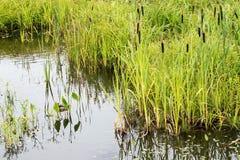 Земли воды и болота Стоковое Фото