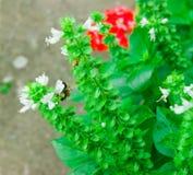 Земли пчелы на цветке Стоковые Изображения