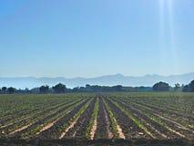 Земли сельского хозяйства Стоковое Изображение