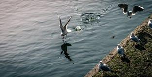 Земли чайки Стоковые Фотографии RF