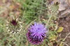 Земли Beel на цветке кактуса Стоковые Изображения