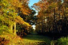 Земля болота Стоковое Фото