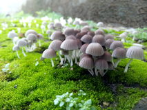 Земля грибов Стоковые Изображения RF
