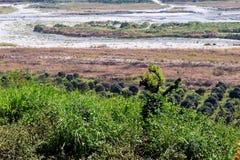 Земля золы (снятой 2) Стоковая Фотография RF