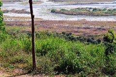 Земля золы (снятой 1) Стоковые Изображения