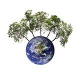 Земля и деревья которая представляет консервацию Стоковое Фото