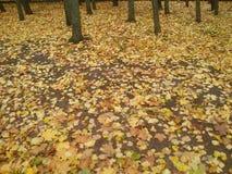 Земля квадрата в осени в Литве Стоковые Изображения