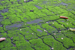 Земля майны мха блока Стоковые Фото