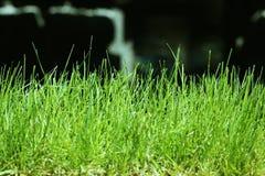 Земля макроса травы Стоковое Изображение RF