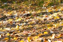 земля дня осени выходит солнечный Стоковые Фото