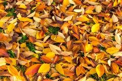 земля дня осени выходит солнечный Стоковые Фотографии RF