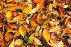 земля дня осени выходит солнечный Стоковое Изображение