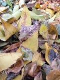 земля дня осени выходит солнечный Стоковое Фото