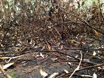 Земля после сгорели огня, который Стоковые Фотографии RF