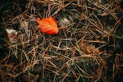 Земля предусматривана в иглах, конусах и листьях сосны текстура элемента конструкции осени Стоковая Фотография RF