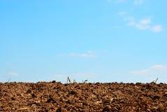 Земля плантации Стоковая Фотография RF