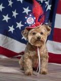Земля свободной патриотической собаки Стоковое Изображение