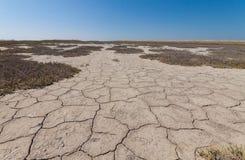 Земля с сухой и треснутой землей Стоковые Фотографии RF