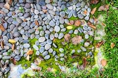 Земля с травой и утесом Стоковая Фотография RF