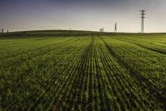 Земля травы Стоковые Изображения RF