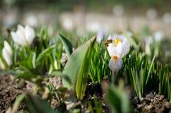 Земля цветка стоковое изображение rf