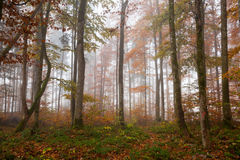Земля Berchtesgadener, лес осени, туман стоковое фото