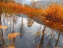 зеркало естественное стоковое фото rf