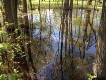 Зеркало воды Стоковое Изображение RF