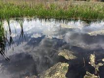 Зеркало в озере Стоковая Фотография RF