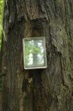 Зеркало на дереве Стоковое фото RF