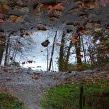 Зеркало лужицы Стоковые Изображения