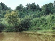 Зеркало Greenot в реке Pasak Стоковое Фото