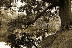 Зеркальное отображение Стоковая Фотография