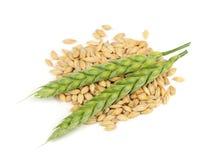 Зерна и уши ячменя изолированные на белой предпосылке Стоковые Фотографии RF