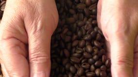 Зерна кофе в руках женщины сток-видео