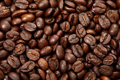 зерна кофе Стоковая Фотография
