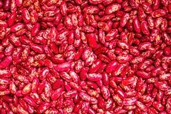 Зерна красных фасолей Стоковое Изображение RF