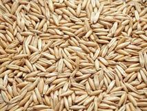 Зерна овса Стоковое фото RF